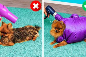 HOW TO BE PERFECT DOG OWNER || Clever And Heart-Warming Pet Gadgets And Crafts For The Loved Ones