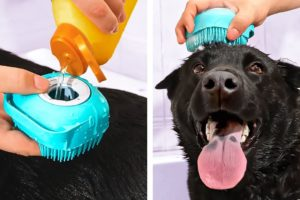 Cute And Smart Pet Gadgets, Hacks And DIY Crafts That Might Be Useful
