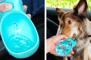 Cute Dog Gadgets And Lovely Crafts For Cats || Genius Pet Hacks That Will Make Your Life Easier