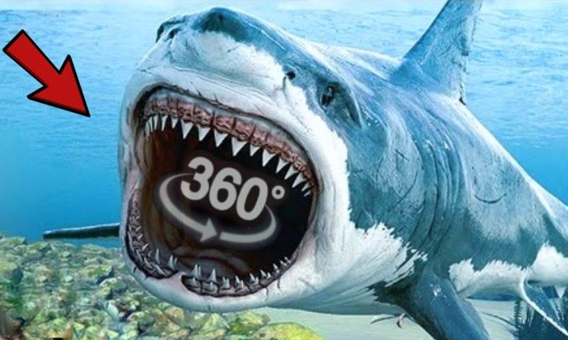 360 Video   Shark Attack - Underwater Deep Sea VR Experience