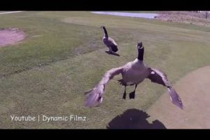 10 Crazy Bits Of Footage Accidentally Caught On Drone Camera